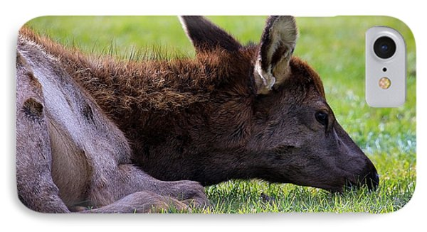 IPhone Case featuring the photograph Baby Elk by Steve McKinzie