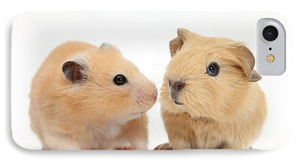 Baby Guinea Pig And Golden Hamster Phone Case by Mark Taylor
