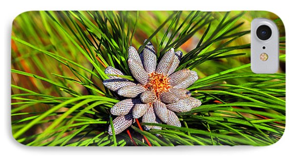 Baby Pine Cones Phone Case by David Lee Thompson