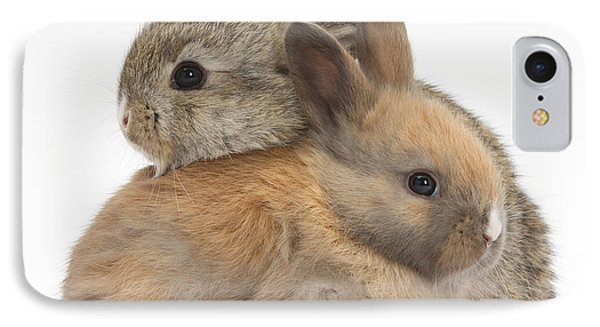 Baby Rabbits Phone Case by Mark Taylor
