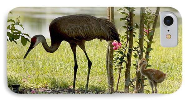 Baby Sandhill With Mom IPhone Case by Carol Groenen