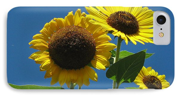 IPhone Case featuring the photograph Back Bay Sunflowers by Bruce Carpenter