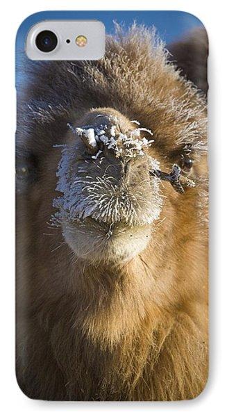Bactrian Camel Camelus Bactrianus Phone Case by David DuChemin