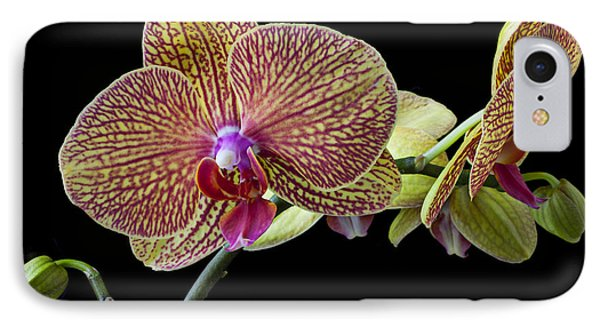 Baeutiful Orchids Phone Case by Garry Gay