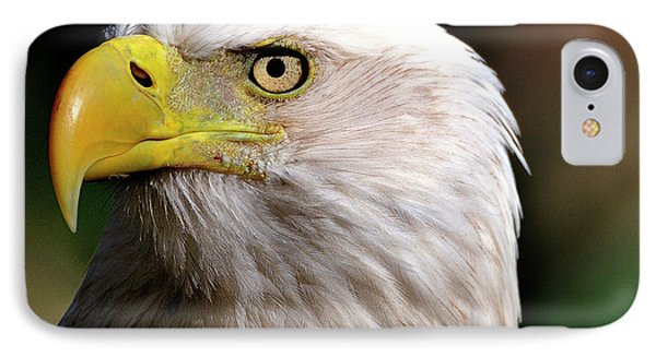 Bald Eagle Close Up IPhone Case