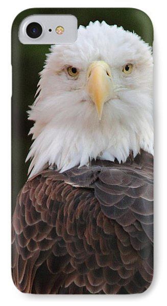 Bald Eagle IPhone Case by Coby Cooper