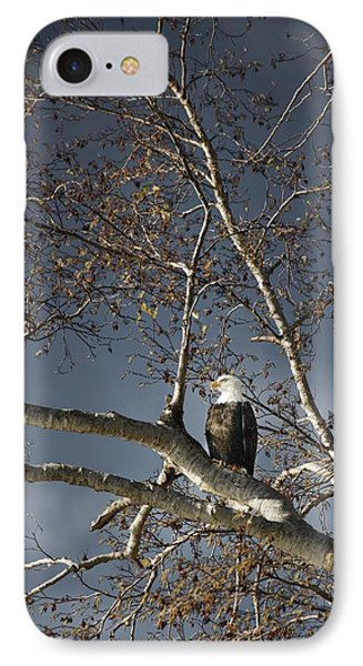 Bald Eagle In A Tree Phone Case by Con Tanasiuk