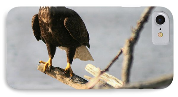 IPhone Case featuring the photograph Bald Eagle On Driftwood by Kym Backland