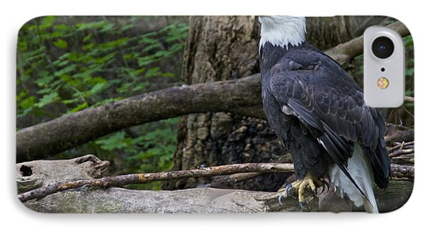 Bald Eagle Phone Case by Sean Griffin