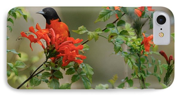 Baltimore Oriole In Orange Honeysuckle IPhone Case
