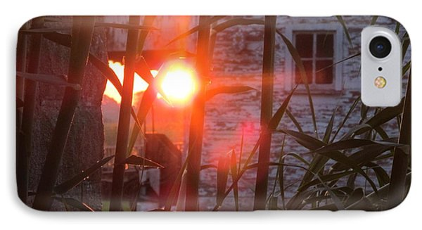 IPhone Case featuring the photograph Bamboo Sunrise by Tina M Wenger