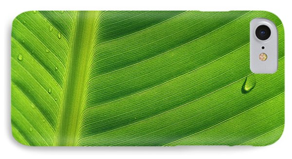 Banana Musa Sp Close Up Of Leaf Phone Case by Cyril Ruoso