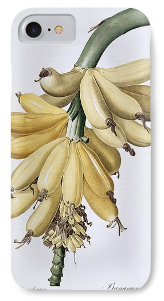 Banana IPhone Case by Pierre Joseph Redoute