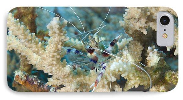 Banded Coral Shrimp Amongst Staghorn Phone Case by Steve Jones