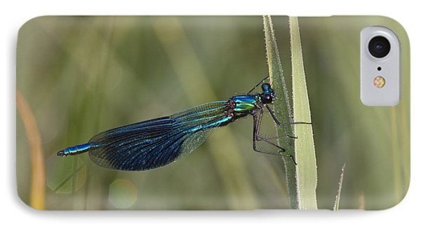 Banded Demoiselle Calopteryx Splendens IPhone Case by Konrad Wothe
