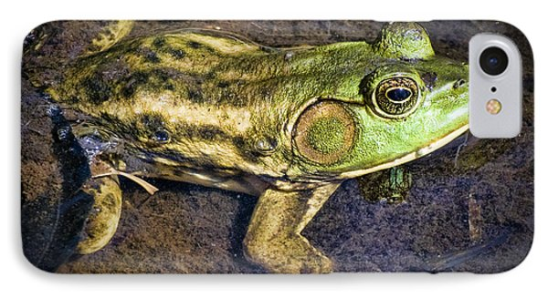 Barataria Swamp Frog Phone Case by Ray Devlin