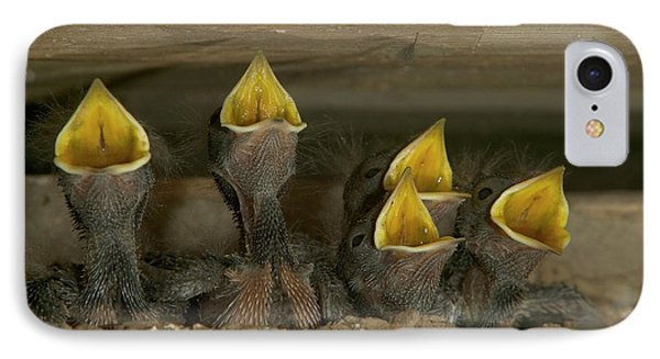 Barn Swallow Hirundo Rustica Chicks Phone Case by Cyril Ruoso
