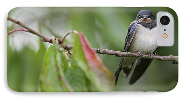 Barn Swallow Hirundo Rustica Fledgling Phone Case by Cyril Ruoso