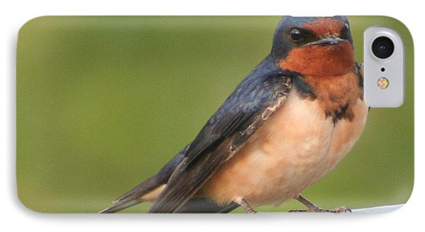 Barn Swallow Phone Case by Laurel Talabere