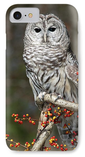 Barred Owl And Bittersweet Phone Case by Cindy Lindow