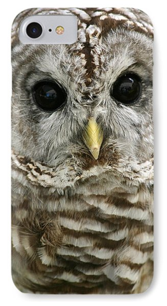 Barred Owl IPhone Case by Cindy Haggerty