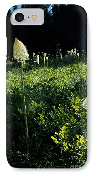 IPhone Case featuring the photograph Bear-grass II by Sharon Elliott