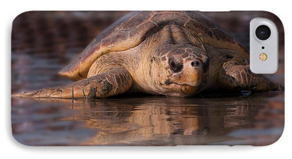 Beaufort The Turtle Phone Case by Susan Cliett