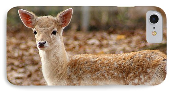 IPhone Case featuring the photograph Beautiful Fawn by Jean Haynes