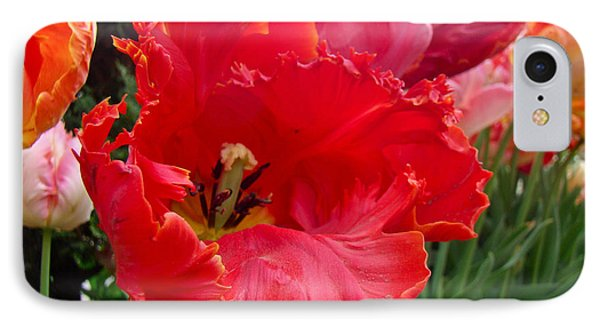 Beautiful From Inside And Out - Parrot Tulips In Philadelphia Phone Case by Mother Nature