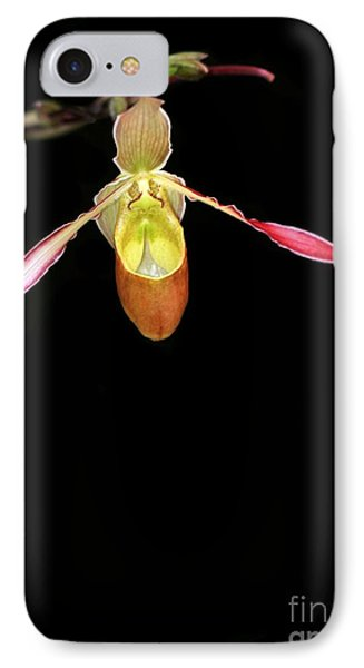 Beautiful Lady Slipper Orchid Phone Case by Sabrina L Ryan