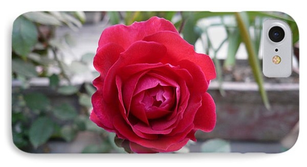 Beautiful Red Rose In A Small Garden Phone Case by Ashish Agarwal