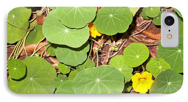 Beautiful Round Green Leaves Of A Plant With Orange Flowers IPhone Case by Ashish Agarwal
