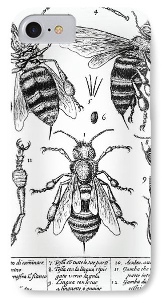 Bee Anatomy Historical Illustration Phone Case by SPL and Photo Researchers