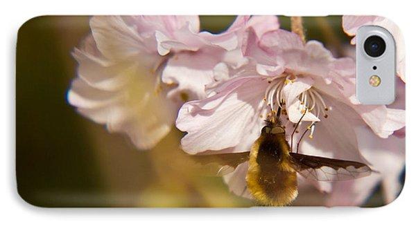 Bee Fly Feeding 1 Phone Case by Douglas Barnett