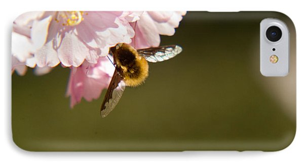 Bee Fly Feeding 4 Phone Case by Douglas Barnett