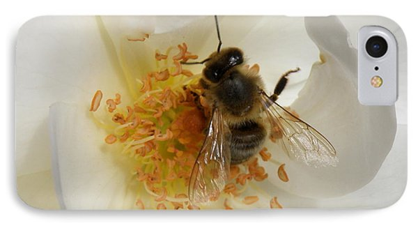 Bee In A White Rose IPhone Case by Lainie Wrightson