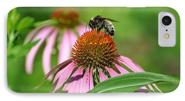 Bee On Pink Flower IPhone Case by Jodi Terracina