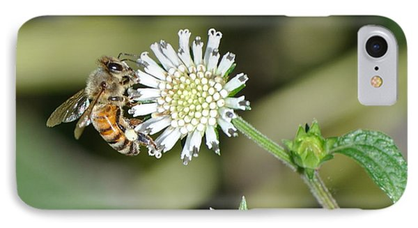 IPhone Case featuring the photograph Bee On White Clover by Jodi Terracina