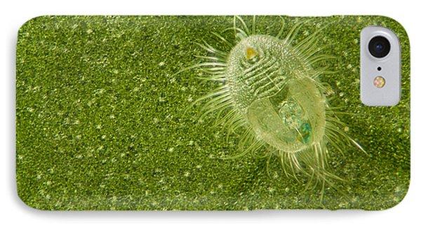 Beetle Larvae On Leaf Phone Case by Raul Gonzalez Perez