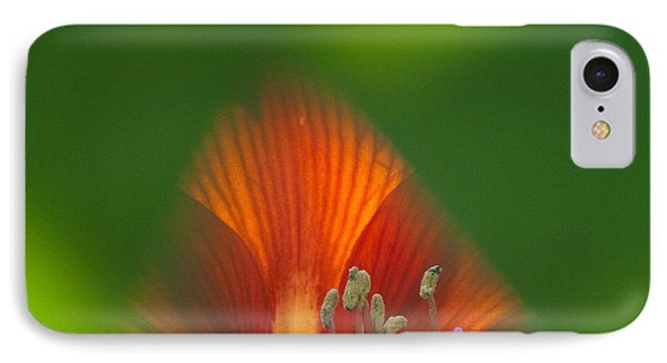 Belladonna Lily Closeup Phone Case by Heiko Koehrer-Wagner