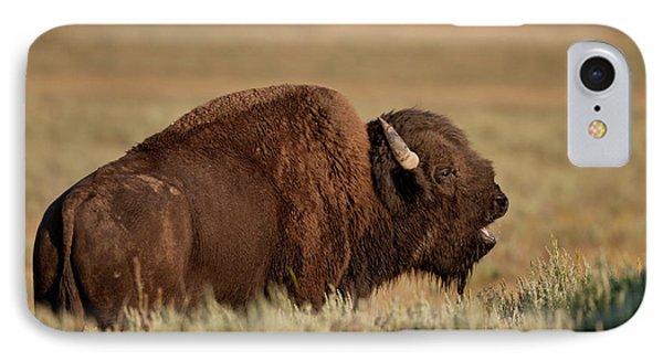 Bellowing Bull Bison IPhone Case by D Robert Franz