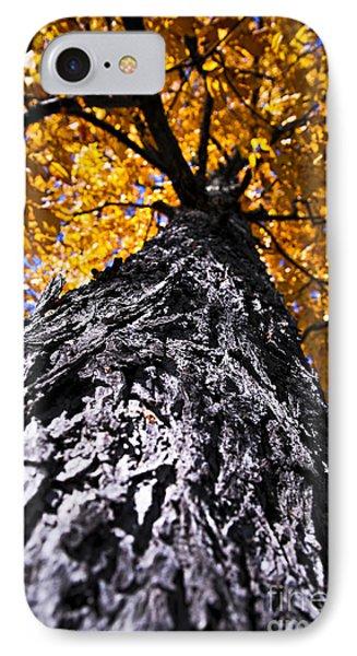 Big Autumn Tree In Fall Park Phone Case by Elena Elisseeva