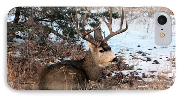 Big Buck At Rest Phone Case by Sara  Mayer