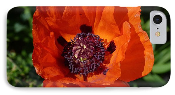 IPhone Case featuring the photograph Big Red Poppy by Lynn Bolt