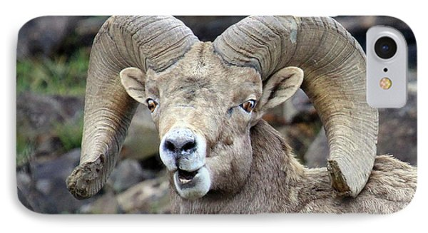 IPhone Case featuring the photograph Bighorn Giant by Steve McKinzie