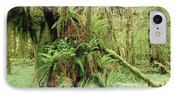 Bigleaf Maple Acer Macrophyllum Trees Phone Case by Gerry Ellis