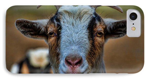 Billy Goat Phone Case by Paul Ward