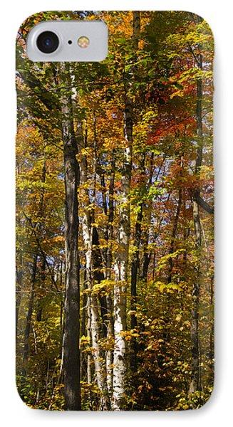 Birch Trail Phone Case by Jo-Anne Gazo-McKim