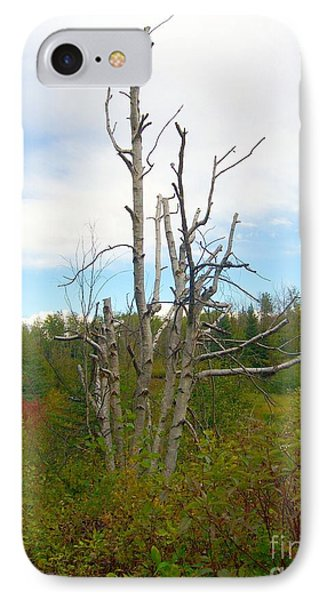 IPhone Case featuring the photograph Birch Tree by Jim Sauchyn