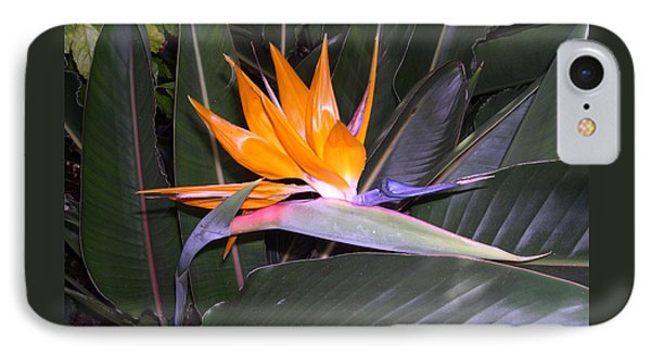 Bird Of Paradise IPhone Case by Claude McCoy